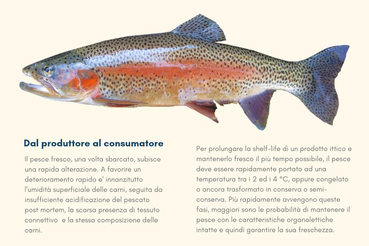 immagine-riconoscere-il-pesce-fresco Come riconoscere il pesce fresco?