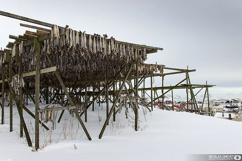 Cod-drying-inHenningsvær-is-a-fishing-village-in-Norway.-Photograph-courtesy-of-NykO18 Il Merluzzo: storia del pesce che ha cambiato il mondo