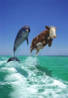 dolphin and cow.img_assist_custom