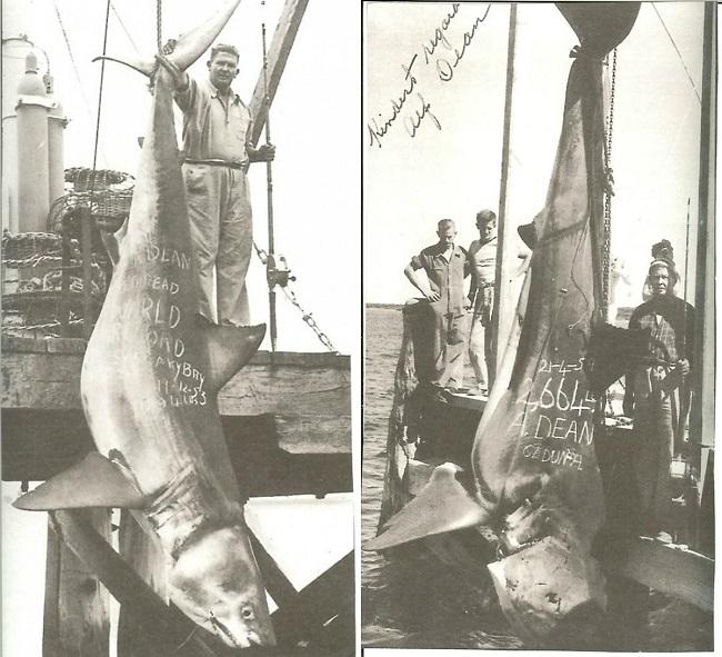 great-white-shark-alf-dean Squalo bianco più grande del mondo