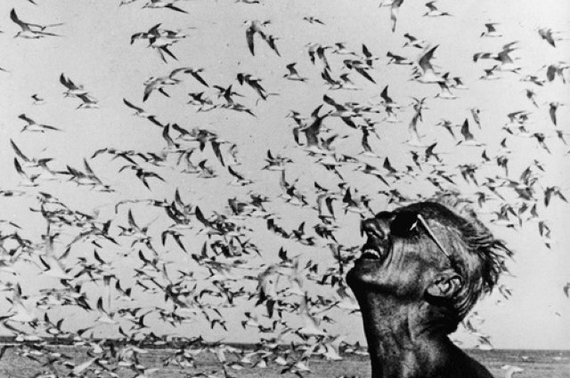 jacques-cousteau-with-birds-near-the-ocean-640x425 Il Capitano Jacques Cousteau: 30 immagini per ricordarlo