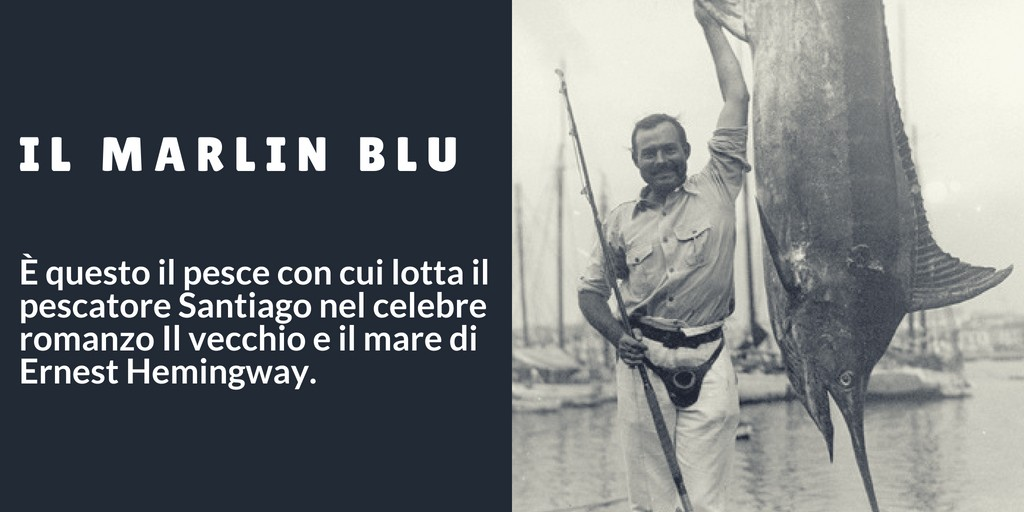 Marlin blu hemingway - Come pescare il marlin