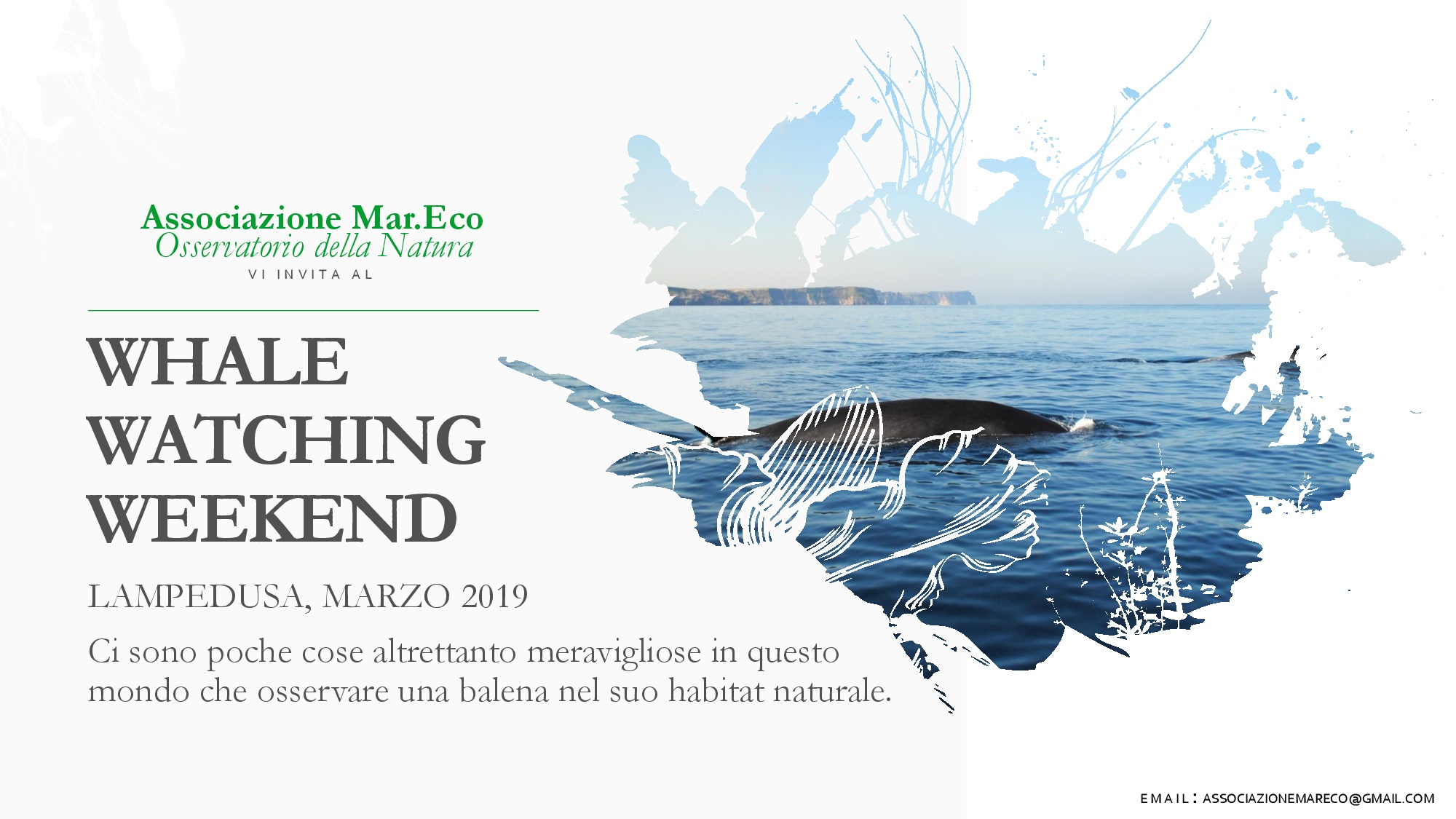 Whale watching a Lampedusa