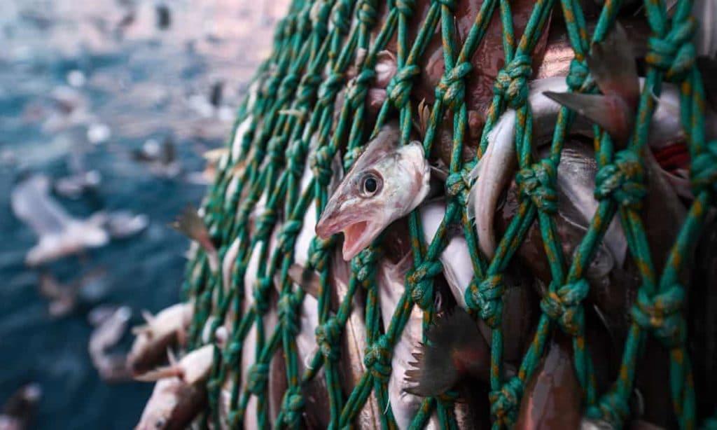 pesca strascico australia